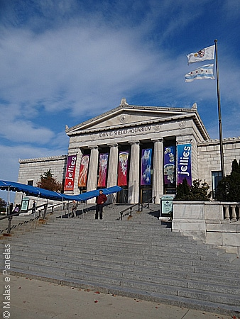 Shedd Aquarium