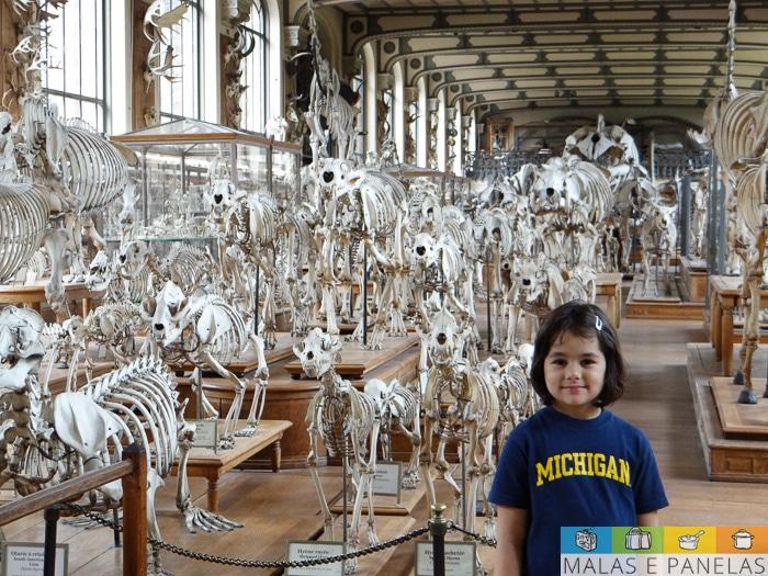 Galeria de Anatomia Comparada e Paleontologia Paris
